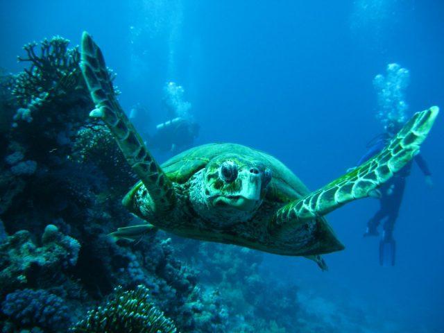 18º Curso de Tartarugas Marinhas com Saída de Barco & Captura Intencional