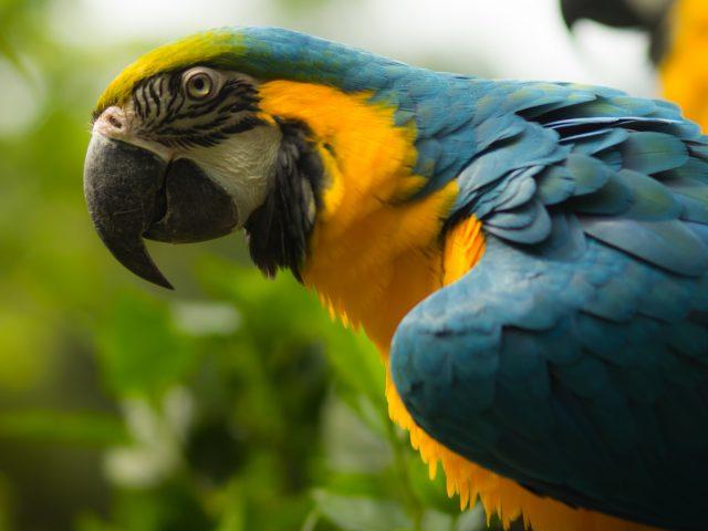 8º Curso Solidário de Manejo de Fauna Exótica & Silvestre