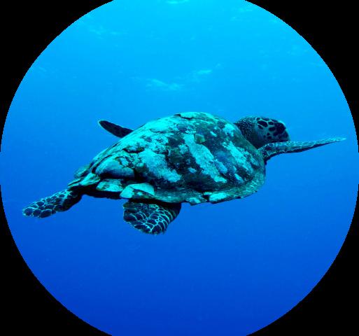 19º Curso de Tartarugas Marinhas com Saída de Barco