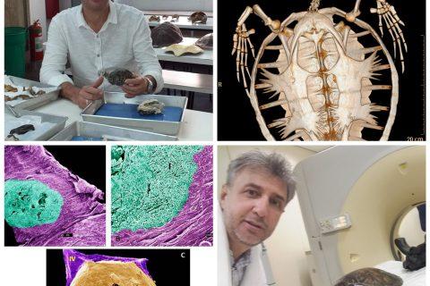 Descoberta Internacional feita por cientista do IBIMM